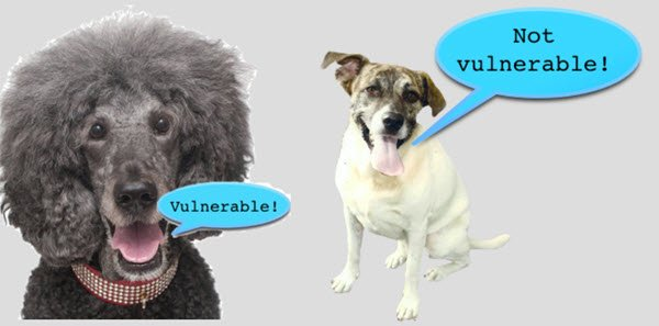 poodle security vulnerability attack ssl3