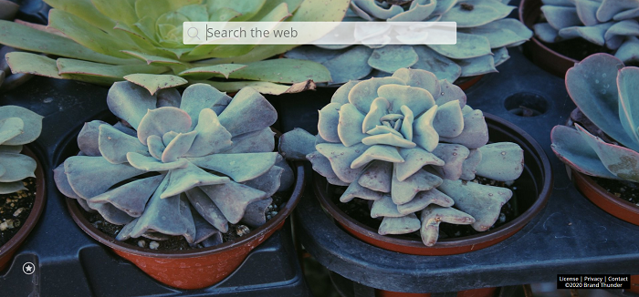 succulent new tab theme