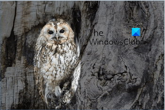 How to blur part of a picture with PowerPoint